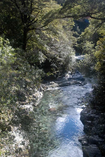 Richmond Ranges, Nelson, beautiful bush walks and swimming spots