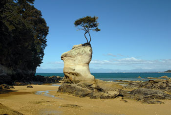 New Zealand native bush, Abel Tasman
